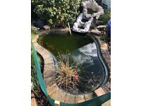 Sensible offers please Pond + all equipment and fish