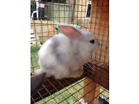 Fluffy Bunnies in need of a forever home - Bunny Rabbits ready to be rehomed
