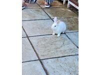 Beauriful baby rabbits