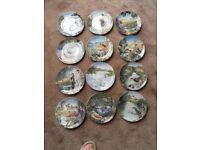 Collectors plates - 12 different bird species