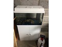 Fish Tank (can deliver 18/4/18)