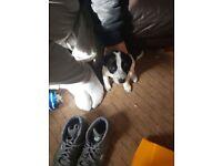 Cross breed puppy