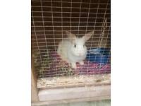 Male rabbit with hutch