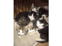 5 kittens ready to go new homes