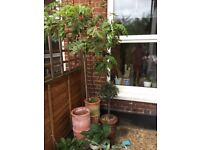Garden pots and plants cheap