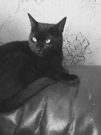 BLACK CAT MISSING