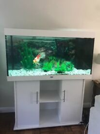 Juwel Rio 300 Fish Aquarium with White Cabinet