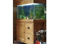 Fish tank (200L) with oak cabinets