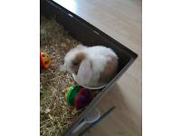 Free mini bunny