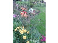 Gardener/Garden Designer - Available For Projects.