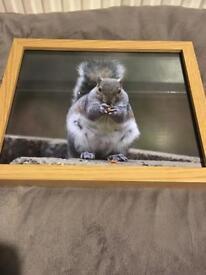 Squirrel 8x10