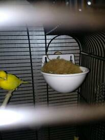 Canary nest pans