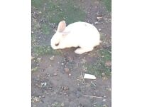 Small rabbits for sale.