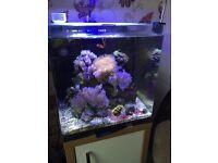 Aqua one Nano Reef Marine aquarium