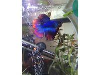 White 20l aquarium/ fish tank
