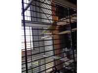 Cock canary cage and table