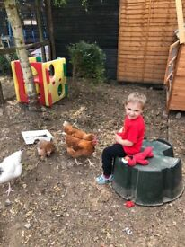 pet sitter needed to look after hens