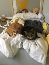 Two cats free to a VERY good home.