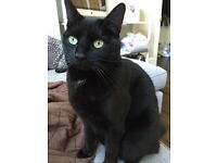 BLACK MALE CAT MISSING IN LOUGHTON ESSEX