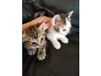2x kittens left teady 5th july