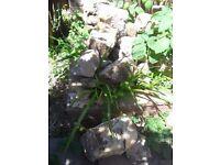 large quantity of rockery rocks stones Hastings