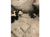 2 gorgeous kittens for sale 9 weeks old