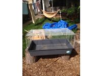 Guinea pigs hutches indoor and outsoor