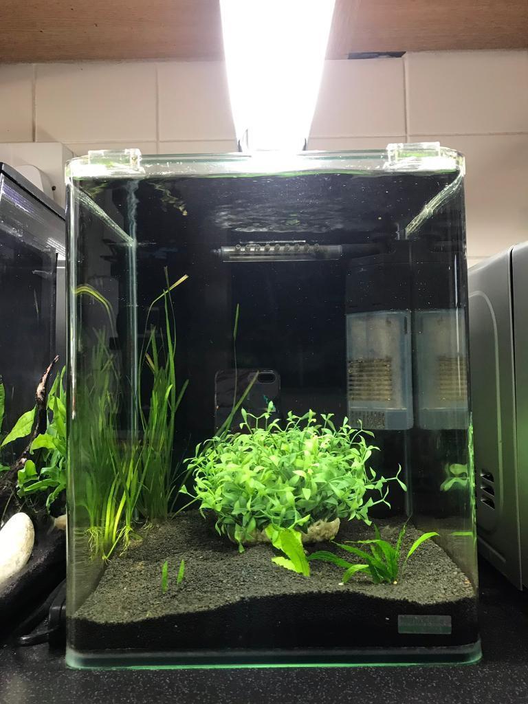 aquarium fish tank dennerle nano tank 20 litre mint condition