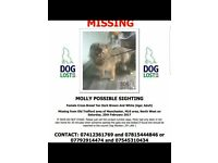 LOST VERY TIMID BROWN FEMALE DOG 25/02/17 OLD TRAFFORD AREA