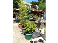 Everything must go...Succulents, Bonsai trees, Exotic plants