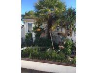 2 x Fully established palm trees