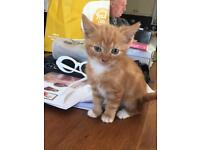 2 male kittens ready to go now ****sold****