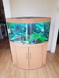 Juwel trigon 190 litre fish tank and stand full tropical setup