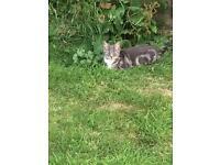 cat sitter/carer