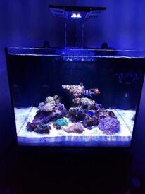 Red Sea reefer 170, LED lights, skimmer and return pump