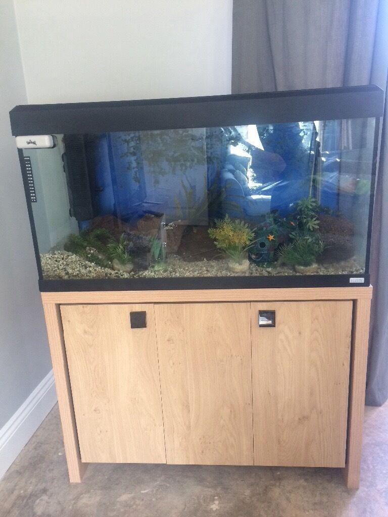 Aquarium fish tank northamptonshire - Large Fluval Fish Tank