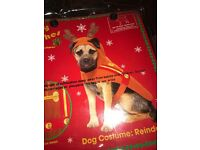Reindeer dog costume for small to medium dog