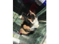 (£40) 16 weeks old kitten