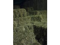 Small bale meadow hay. £3