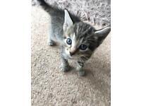 X2 kittens left 1 male 1 female