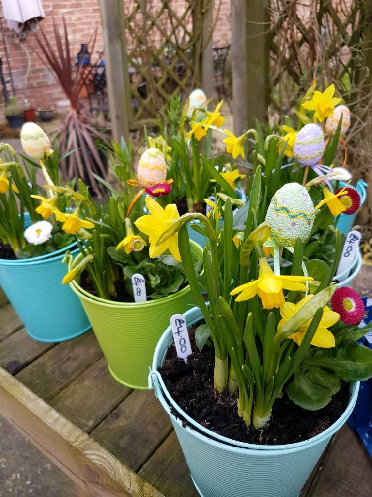 Easter plants gifts in driffield east yorkshire gumtree easter plants gifts negle Gallery