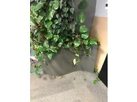 Large grey 's-shape' planter, suitable for indoor or outdoor use