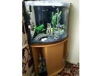 Aqua One Corner Aquarium Fish Tank ADA
