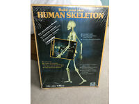 (new unopened) Full Size Human Skeleton cardboard kit - London EC2A / SE4