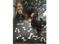 2 lovely dogs for rehoming together.