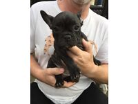 Only 2 left! French Bulldog beautiful girls £1500
