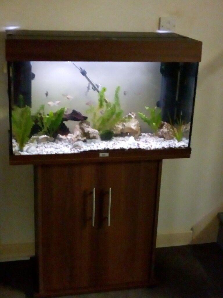 juwel rio 125 litre set up in totton hampshire gumtree. Black Bedroom Furniture Sets. Home Design Ideas
