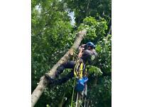 TREE CARE, TREE SURGERY FIFE & SURROUNDING AREAS