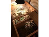 Tortoise table