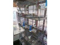 Set of 8 bird breeding metal cages